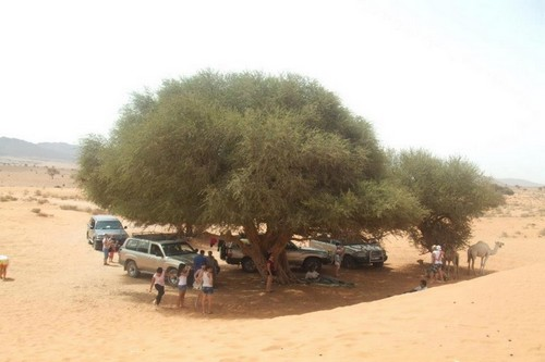 Small Desert Agadir Discovery Excursion